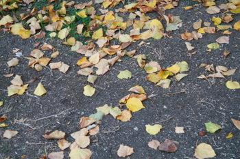Fall_flora_20071007_054