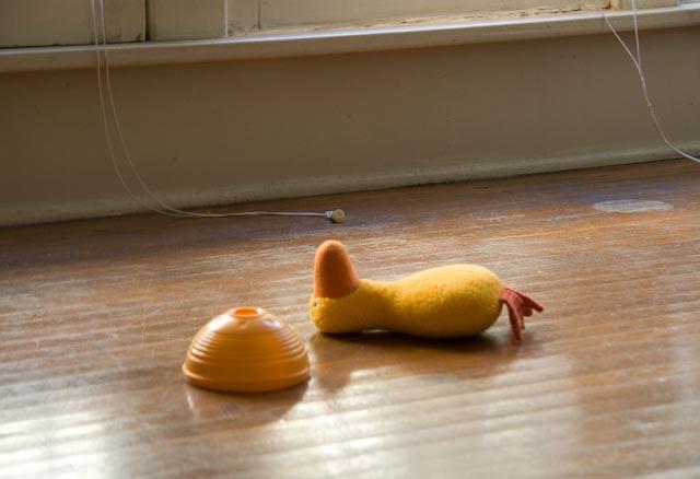 Dead_duck_6
